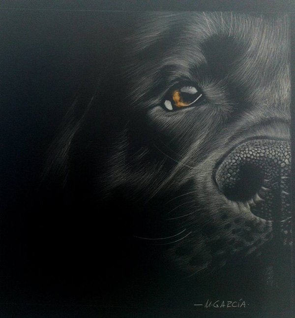 Manuel Garcia Gonzalez dibujo de un perro