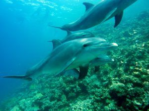 dolphins-378217_640