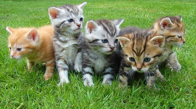 Breve Historia de los gatos