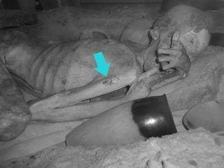 Tatuaje del hombre de Gebelein. Momia. Museo Británico