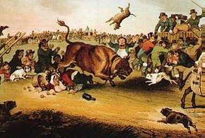 hostigamiento de toros