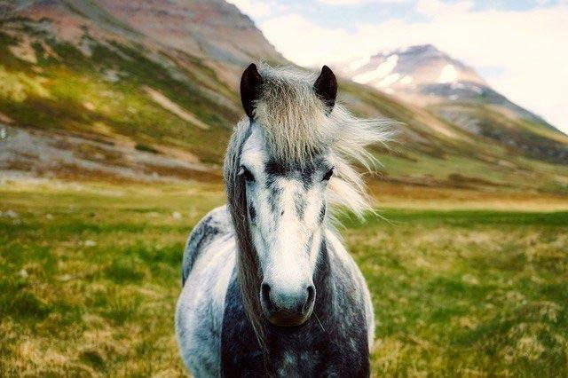 Incitatus el caballo de Calígula